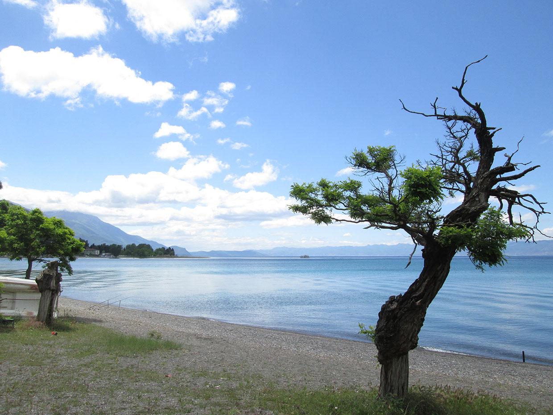 2_Вид на озеро Охрид с деревом